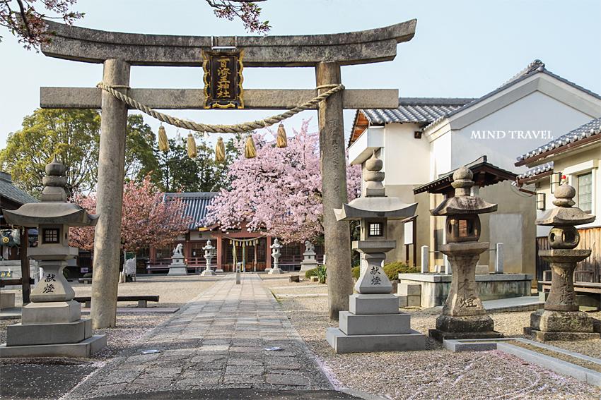 百済王神社 鳥居 桜
