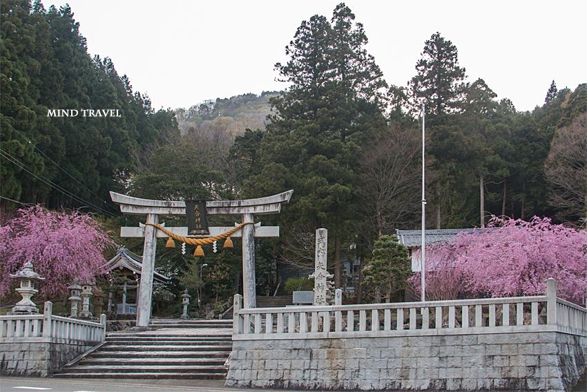 矢合神社 鳥居 桜