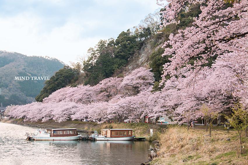 海津大崎 桜と舟