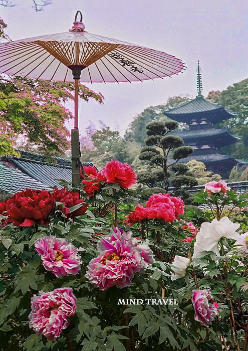 當麻寺 千仏院より東塔を望む 牡丹