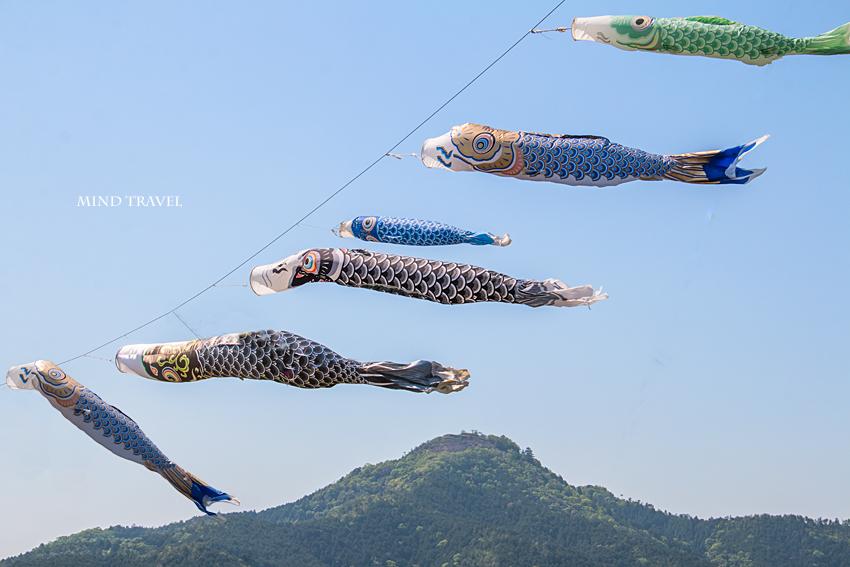 黒井城 鯉のぼり