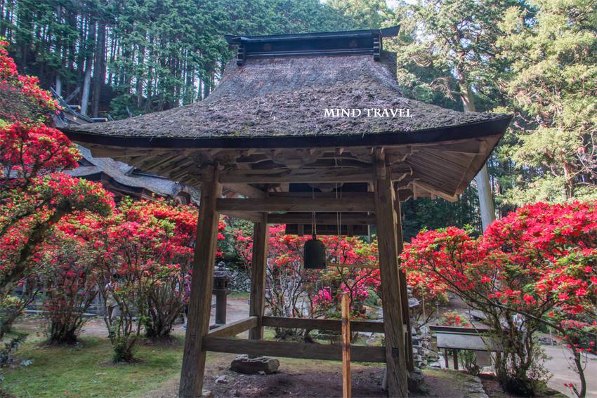 一ノ宮神社 キリシマツツジ3