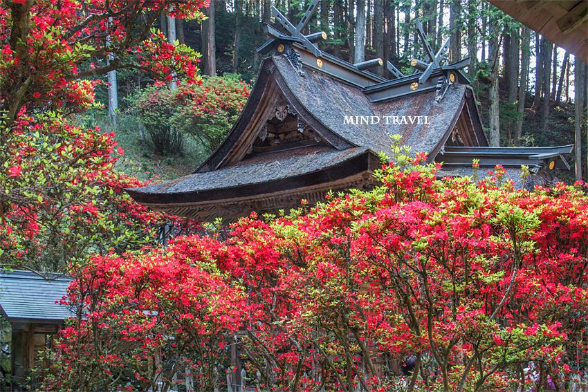 一ノ宮神社 キリシマツツジ-本殿2