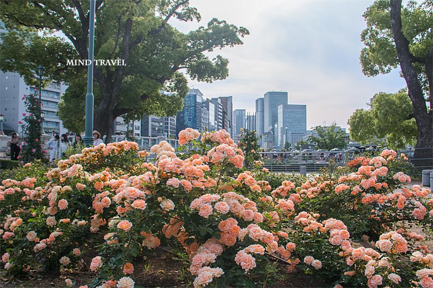 中之島薔薇園 オレンジ色のバラ