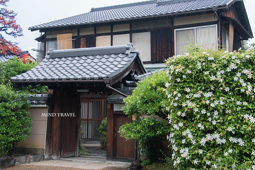 東福寺付近 くちなし