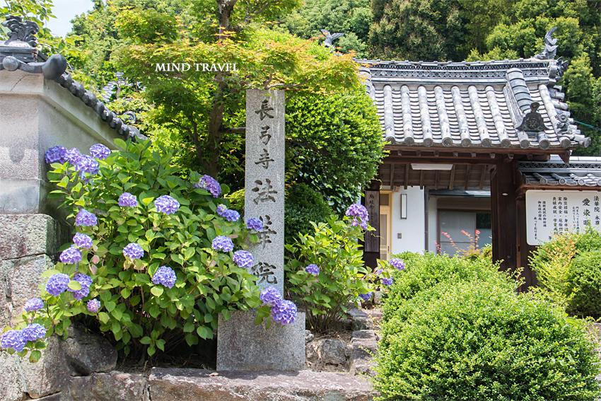 長弓寺 法華院 紫陽花
