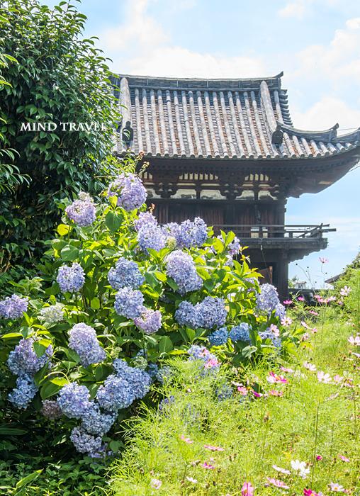 般若寺 楼門 紫陽花