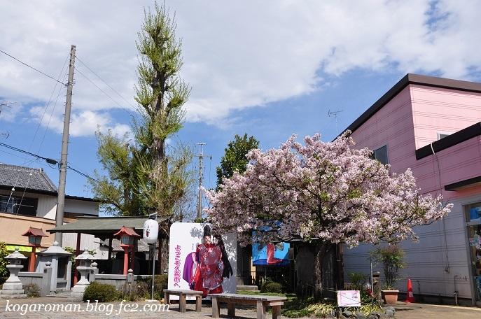 静御前墓所の静桜2
