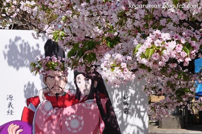 静御前墓所の静桜3