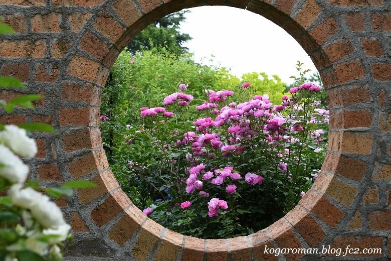 トレジャーガーデンのバラ7
