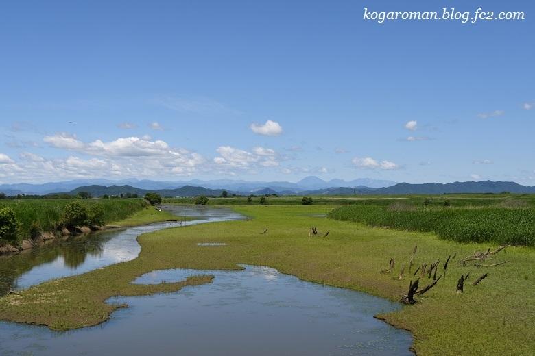 初夏の渡良瀬遊水地