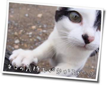 ネコの気持ちが分かるかい?