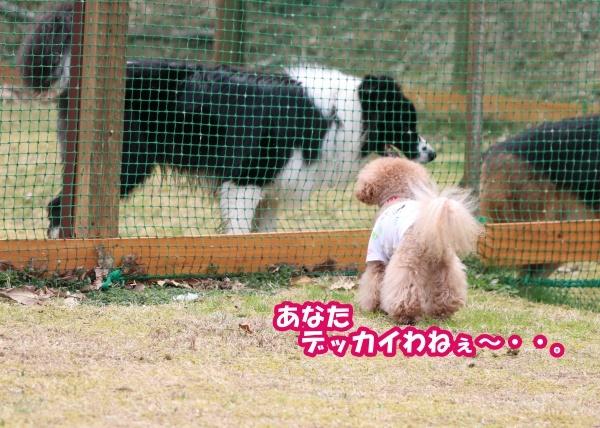 IMG_232720180401大型犬をコッソリ。。