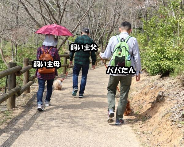 IMG_233720180401山桜の並木道2