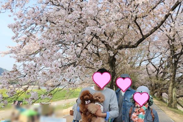 IMG_237620180403背割提の桜でみんなでパチリ1