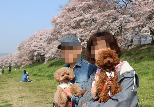 IMG_242520180403背割提の桜と飼い主