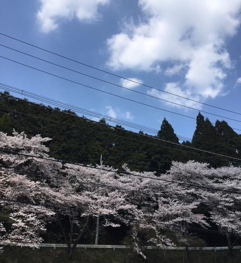 IMG_7382 (002)20180403抹茶デザート桜が見えた