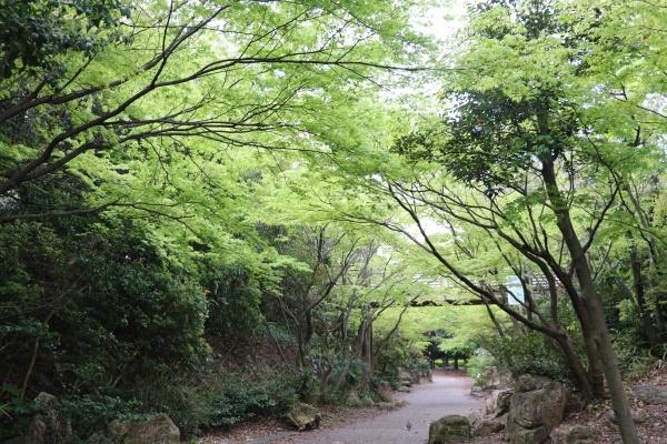 IMG_255420180408梅小路さんぽ新緑綺麗1