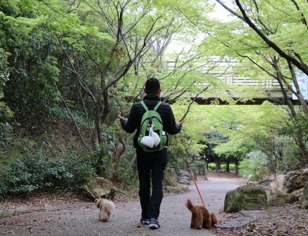 IMG_255620180408梅小路さんぽ新緑綺麗2