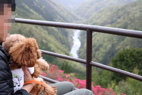 IMG_296420180417保津峡眺めるコノマハ