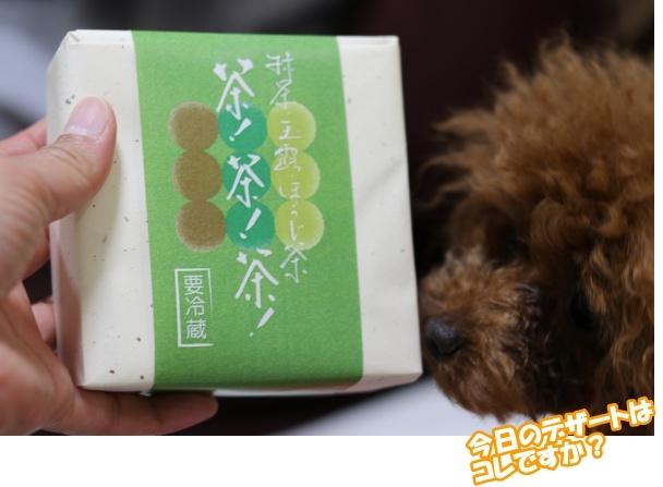 IMG_389020180508茶茶茶とマハ1