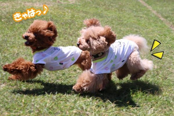 IMG_433920180522琵琶湖バレイドッグラン姉妹愛?3