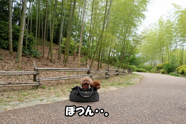 IMG_463420180527けいはんな記念公園竹林のコノマハ2