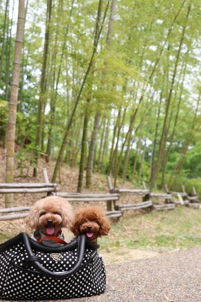 IMG_464220180527けいはんな記念公園竹林のコノマハ