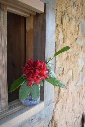 シャクナゲ(国花)