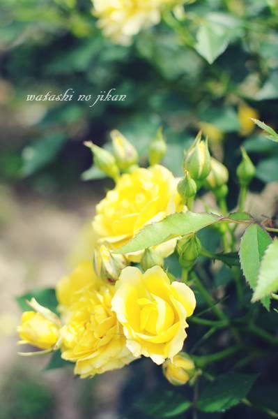 flower190723.jpg