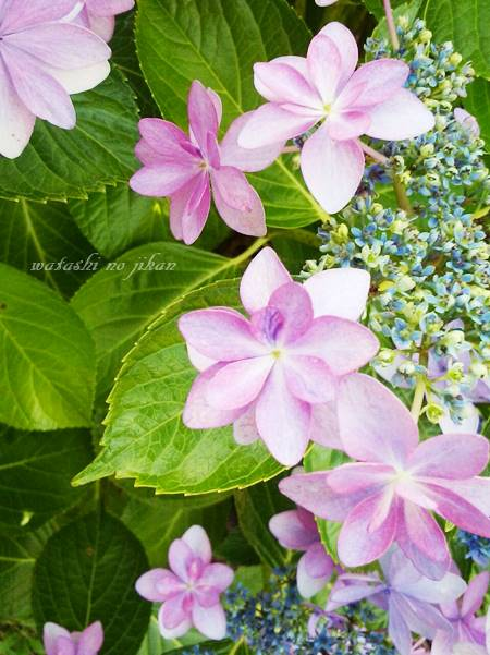 flower20190714.jpg