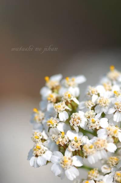 flower20190724.jpg
