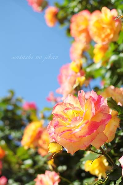 flower20190726.jpg