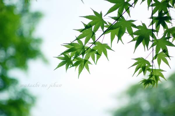 photo20190728.jpg