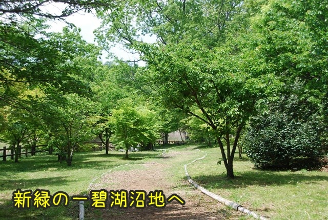 a-DSC_5998.jpg