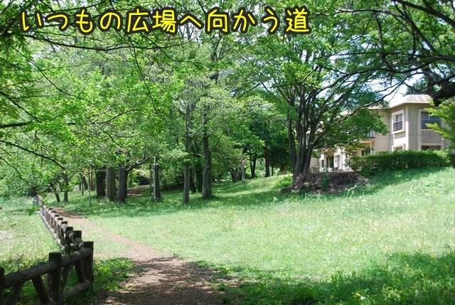 a-DSC_6008.jpg