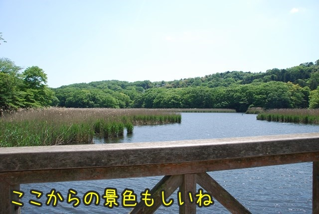 a-DSC_6032.jpg