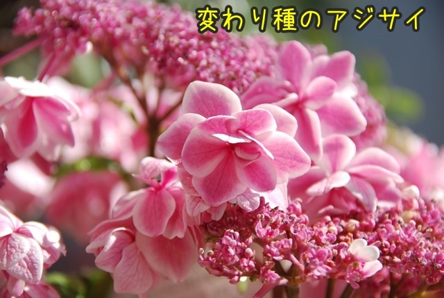 a-DSC_6171.jpg