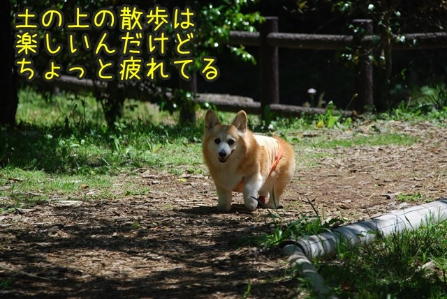 a-DSC_6176.jpg