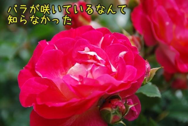 a-DSC_6411.jpg