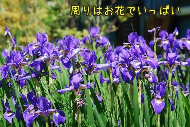 a-DSC_6643.jpg