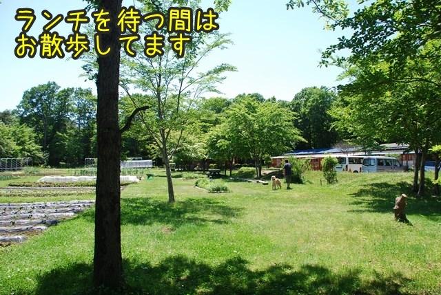 a-DSC_6645.jpg