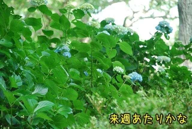 a-DSC_6687.jpg
