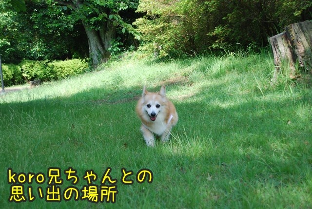 a-DSC_6703.jpg
