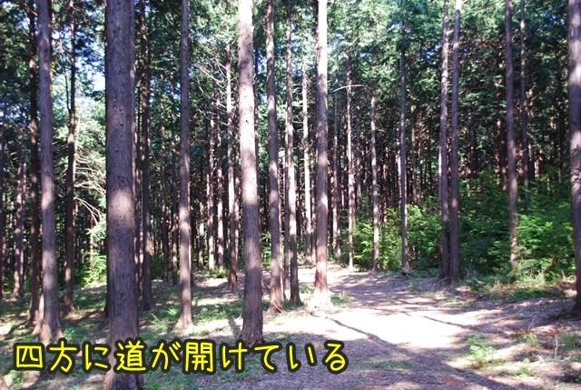 a-DSC_6784.jpg