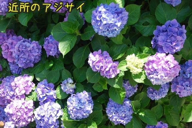 a-DSC_6789.jpg