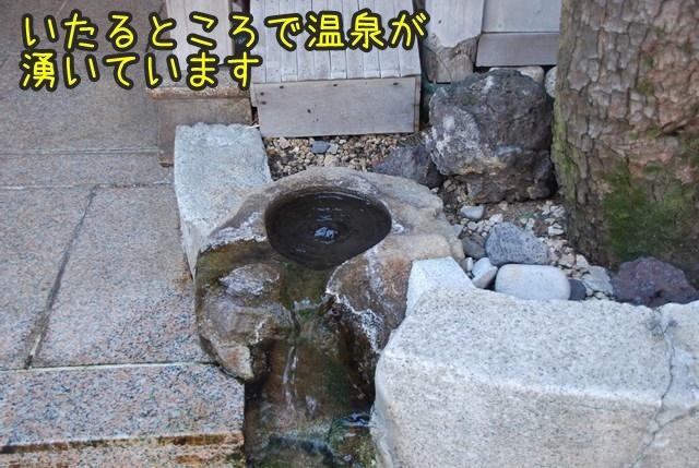 a-DSC_6794.jpg