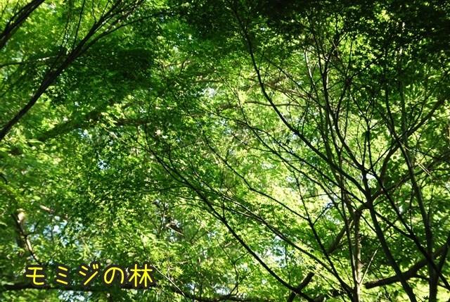 a-DSC_6818.jpg