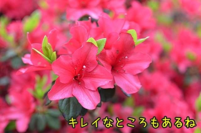 a-DSC_9059.jpg
