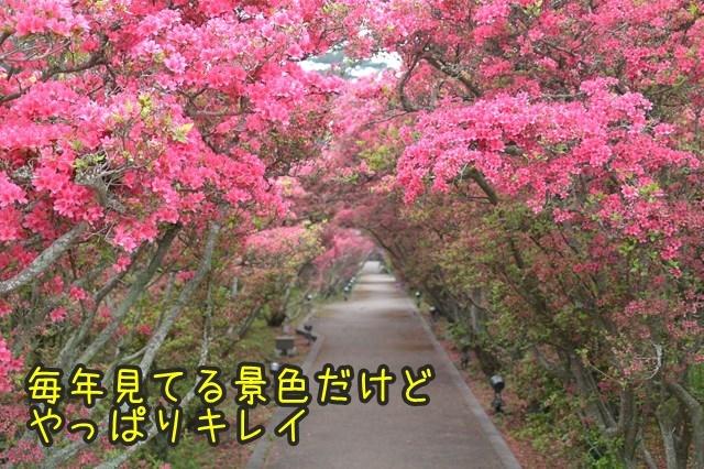 a-DSC_9070.jpg